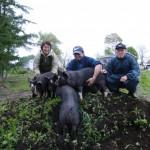 ホエーミルク豚2010-1